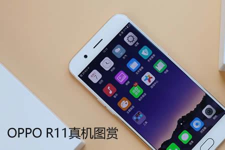 R11图片